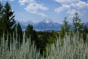 Another view of the Tetons from Signal Mountain.