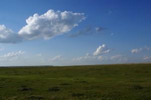 A prairie dog town in TRNP.