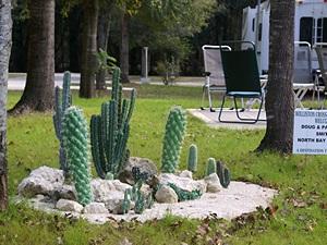 A cactus garden.