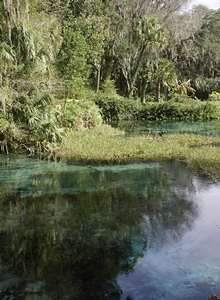 Part of the Rainbow Springs headwaters area.