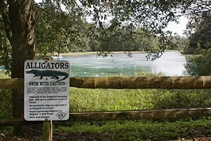 Alligator warning (although none seen recently here).