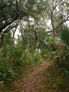 The Big Pine Trail at Big Talbot Island SP (FL).