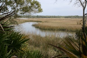 The marsh at the end of the Big Pine Trail, BTISP (FL).