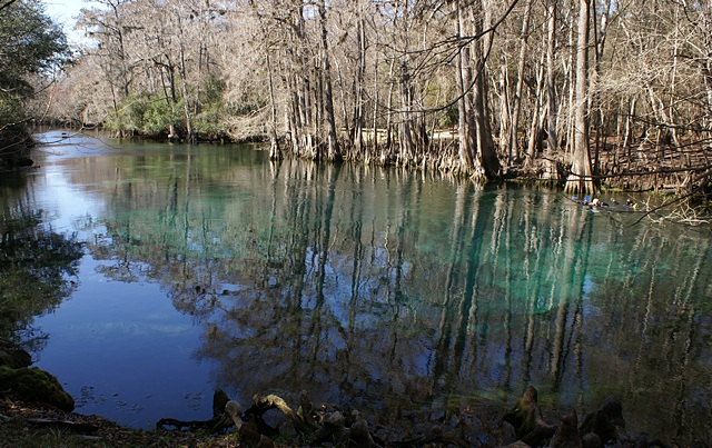 The headsprings at Manatee Springs SP (FL).
