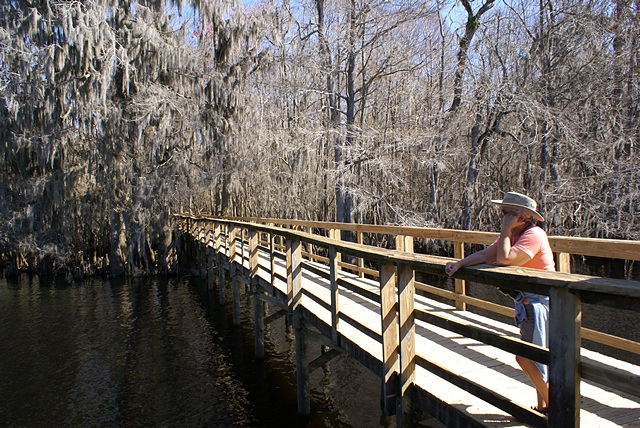 Linda on the Suwannee River Boardwalk at Manatee Springs SP (FL).