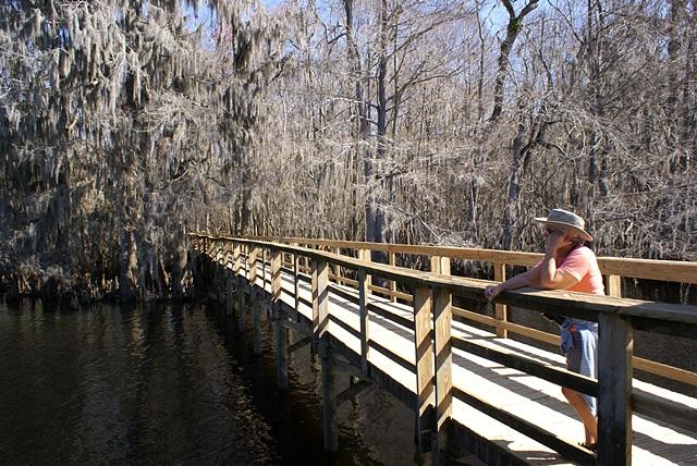 Linda on the Suwannee River Boardwalk at Manatee Springs SP (FL).