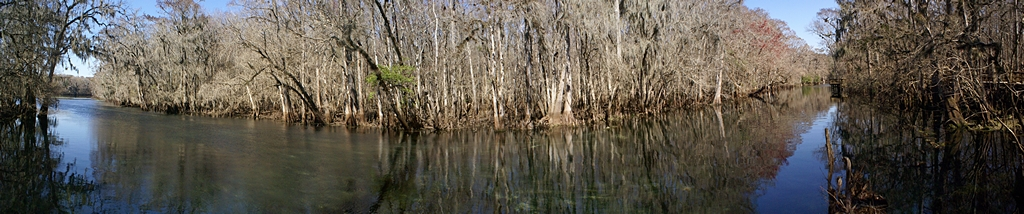 Manatee Springs Tributary to the Suwannee River, Florida.  (MS-ICE composite of 7 photos.)
