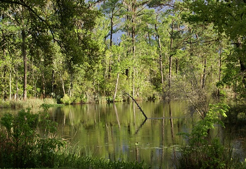 The Choctawhatchee River at Live Oak Landing.