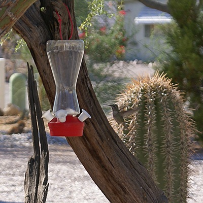 We have two humingbird feeders in the cactus garden by our coach.  Look carefully to the right of the feeder.
