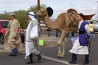 Yup, that's a real, live camel in the Hi Jolly Daze Parade. These animals are strongly linked to the 19th century history of Quartzsite, AZ.