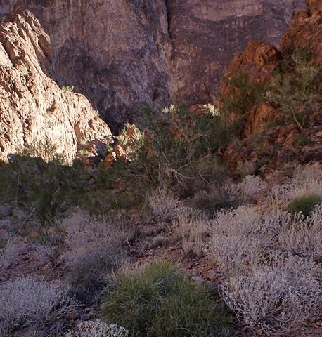 Deeper into Palm Canyon approaching the 1/2 mile mark.  KOFA NWR, AZ.