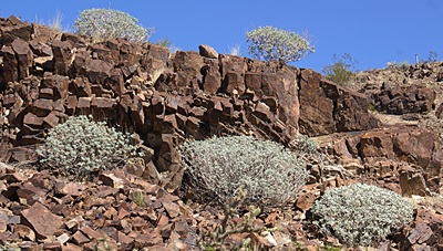 Rocks and flora at Quinn's Pass, AZ.