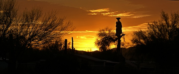 The sunset in Q backlights Saguaro cactus, a palm, and a Palo Verde tree.