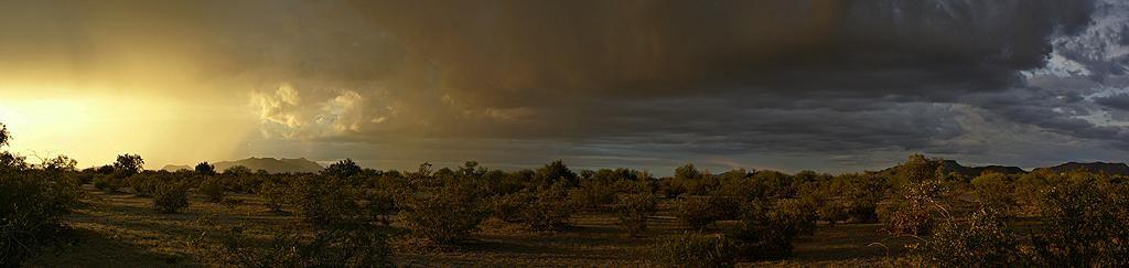 Panorama of a desert thunderstorm at sunset near Why, AZ.