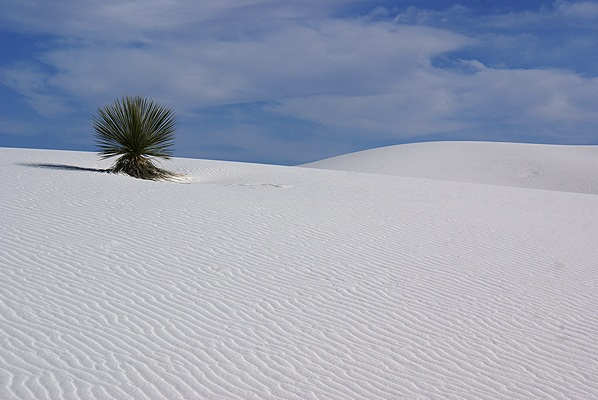 Almost as amazing as the white sands are the things that manage to grow in them.  The sands eventually obliterate everything in their path.