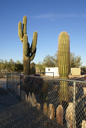 Quartzsite is in the Sonoran Desert and many of the properties have Sugauro Cactus.  Palo Verde and Greasewood bushes are also common with some smaller cactus, but no lawn grass.