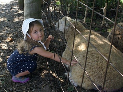 Madeline pets one of the sheep at the Kensington Metropark animal farm.
