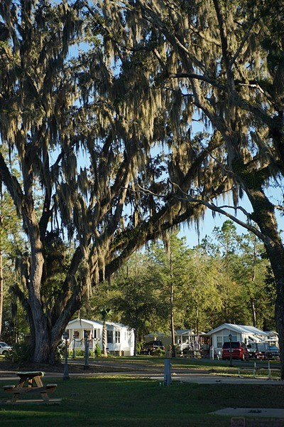 Williston Crossings RV Resort has lovely, mature landscaping including large, majestic Live Oak trees draped in Spanish moss.