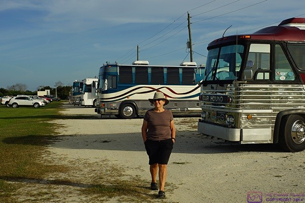 Linda strolls along one of the rows of converted buses at the Arcadia Rally 2016.