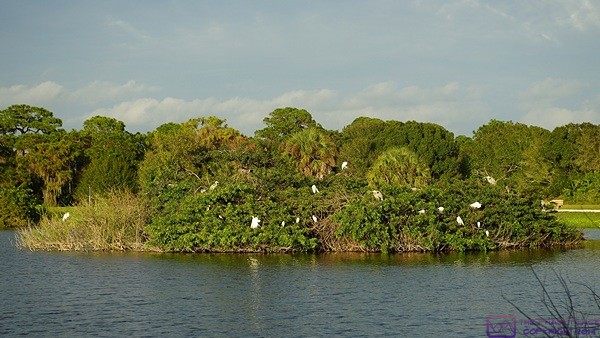 The island at the Venice Rookery, Venice, FL.